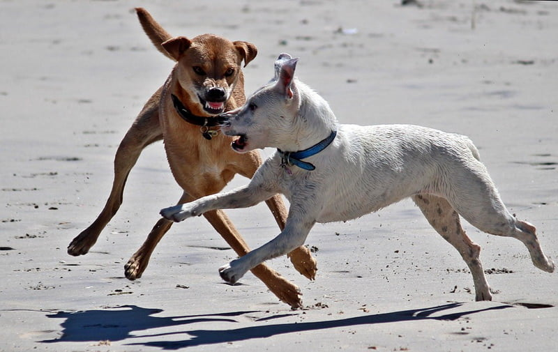 Dogs showing aggression to one another