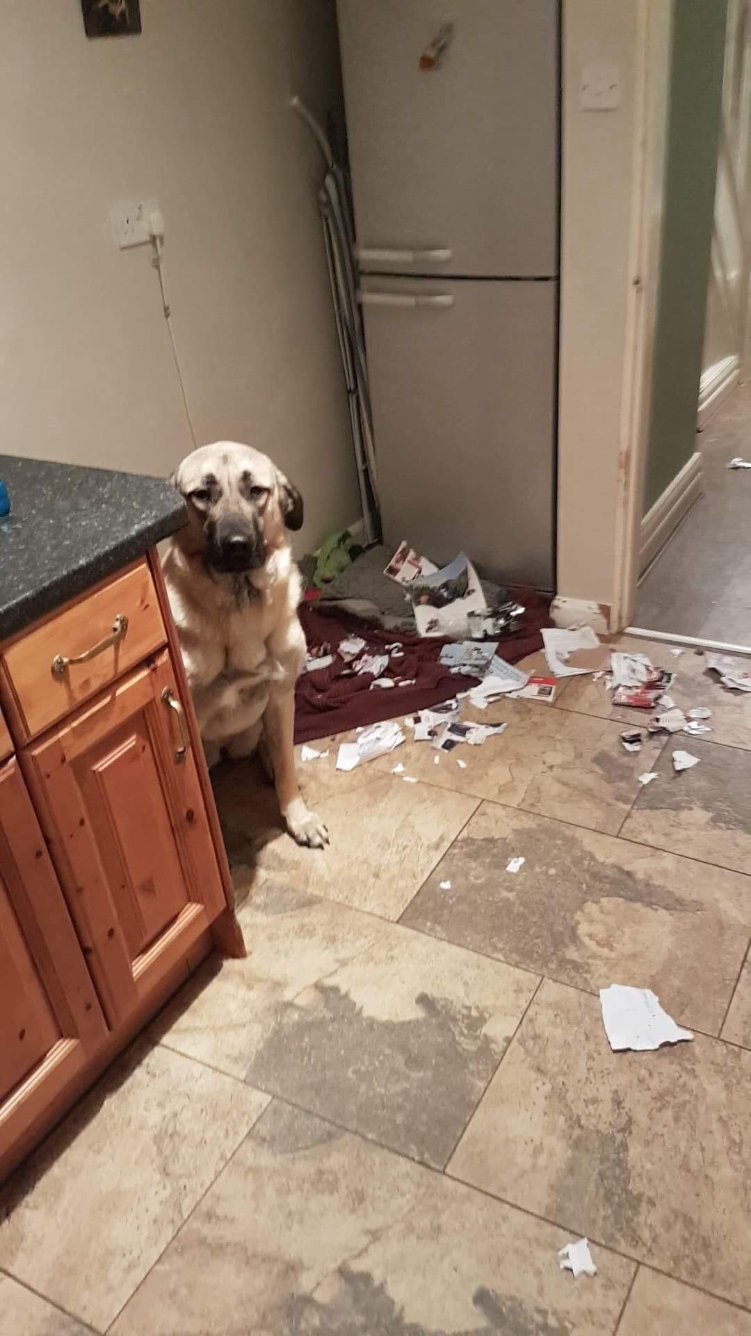Dog showing anxiety