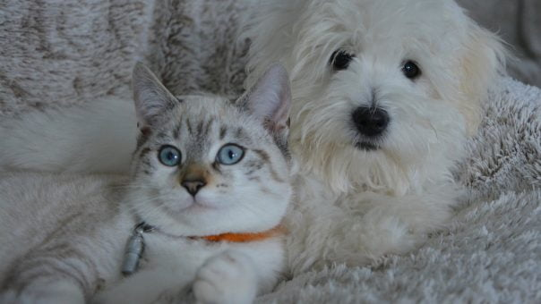 Dog and cat laying together