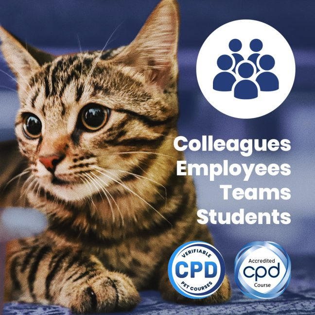 Advanced Certificate in Feline Fear, Anxiety & Aggression
