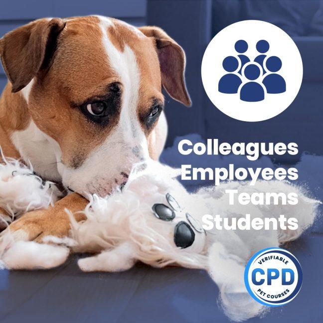 Canine Separation Anxiety Webinar